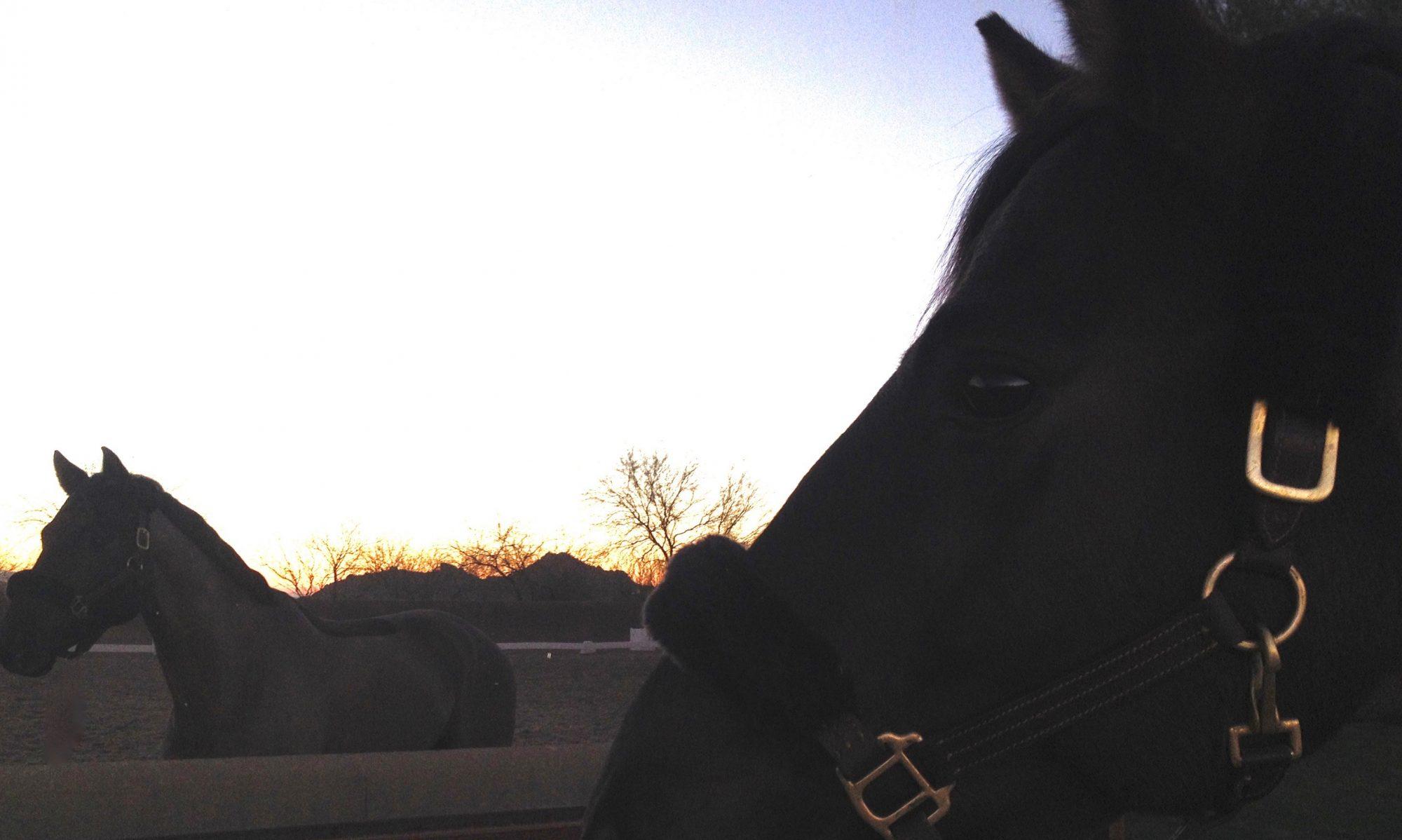 Accord Equestrian Academy